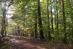 Rümpfwaldweg