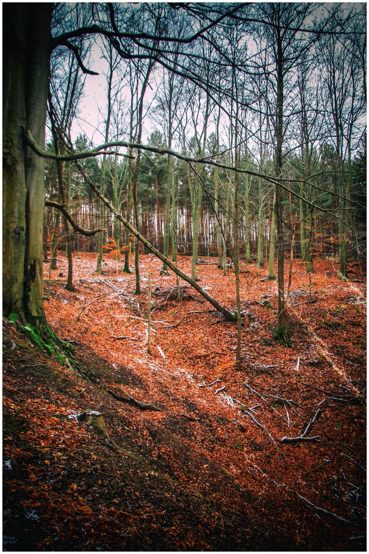 Rümpfwaldwinter