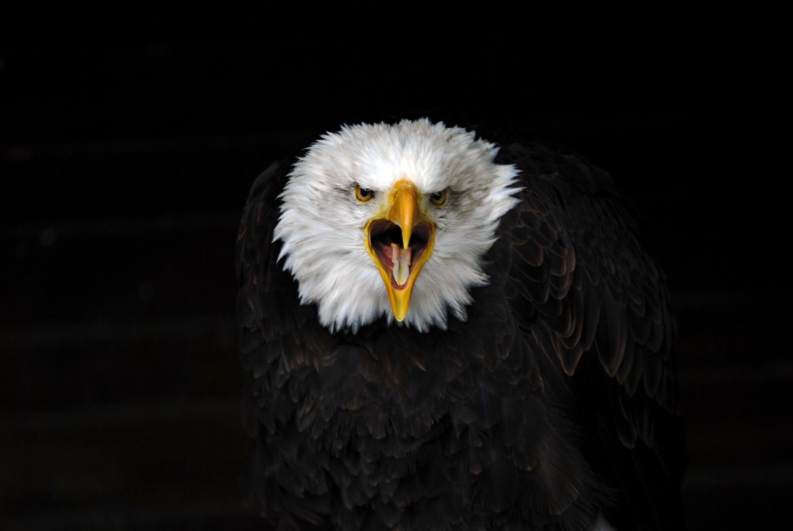 Ruf der Freiheit...