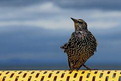 Ruffled feathers - Gut gefedert