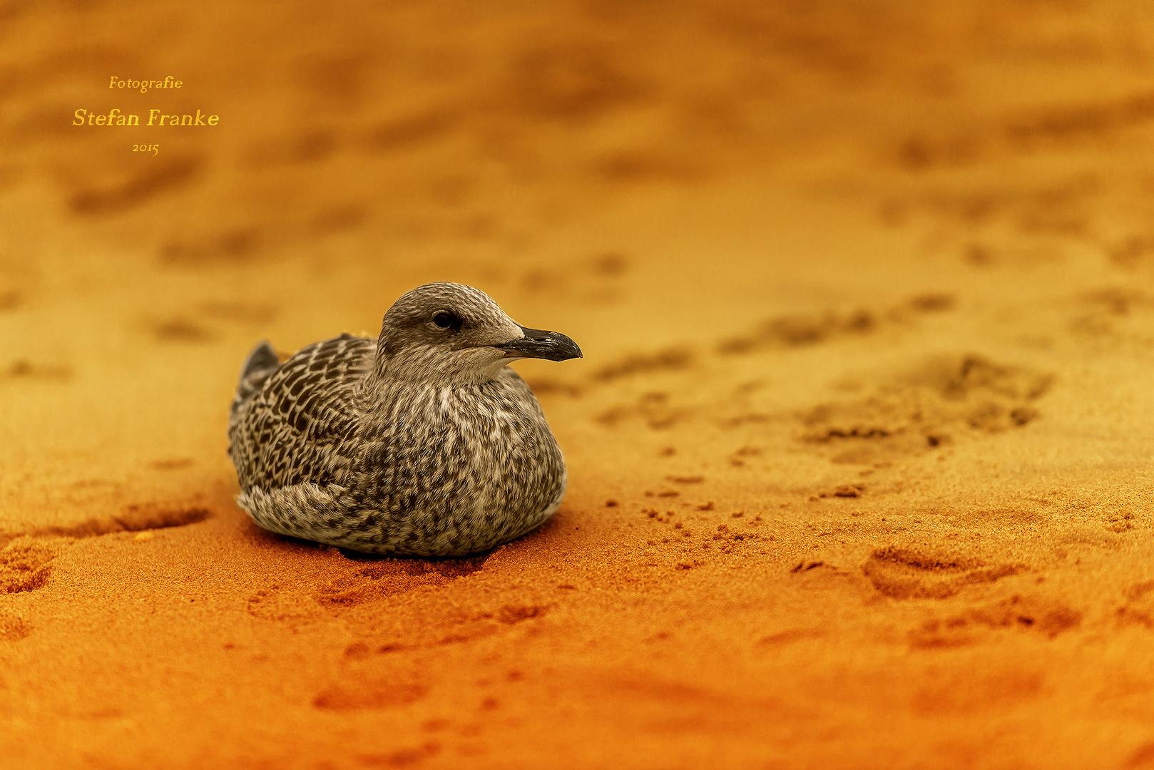 Ruhe gönnen Foto & Bild   tiere, wildlife, wild lebende vögel ...