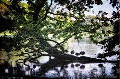 Ruhe im Naturpark Schwalm ... Nette