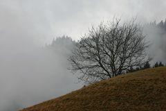 Ruhe im Nebel