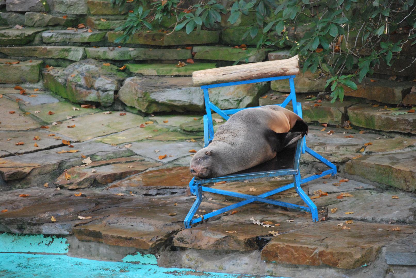 Ruhe im Zoo