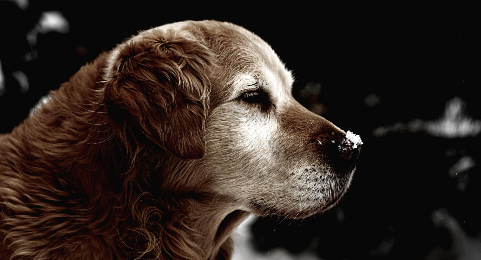 Ruhe In Frieden Mein Alter Freund Foto Bild Tiere Haustiere