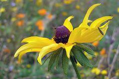 Ruhepause bei den Wildblumen