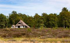 Ruhepunkt Hiddensee -Sommerträume (9)