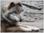 RUHEwolf