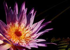Ruhiges Mittwochsblümchen