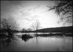 Ruhrhochwasser - Schwäne schwimmen auf einer meiner Laufstrecken...