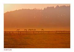 *Ruhrwiesen im Nebel*