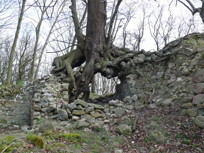 Ruine Lauenburg am Harz