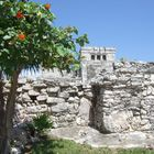 Ruinen mit Blütenpracht