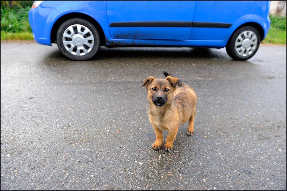 Rumäniens Straßenhunde