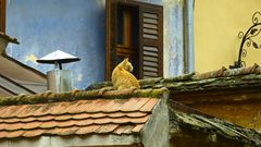Rumänische Katze