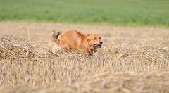 Run Ayla .........................