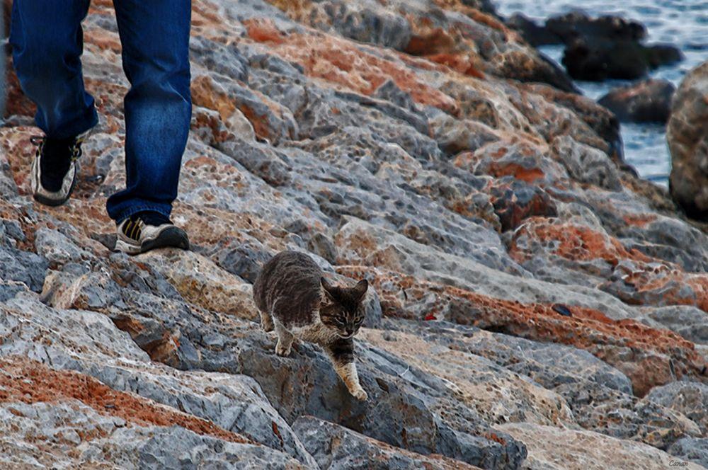 Run Kitty...Run  ! ! !...