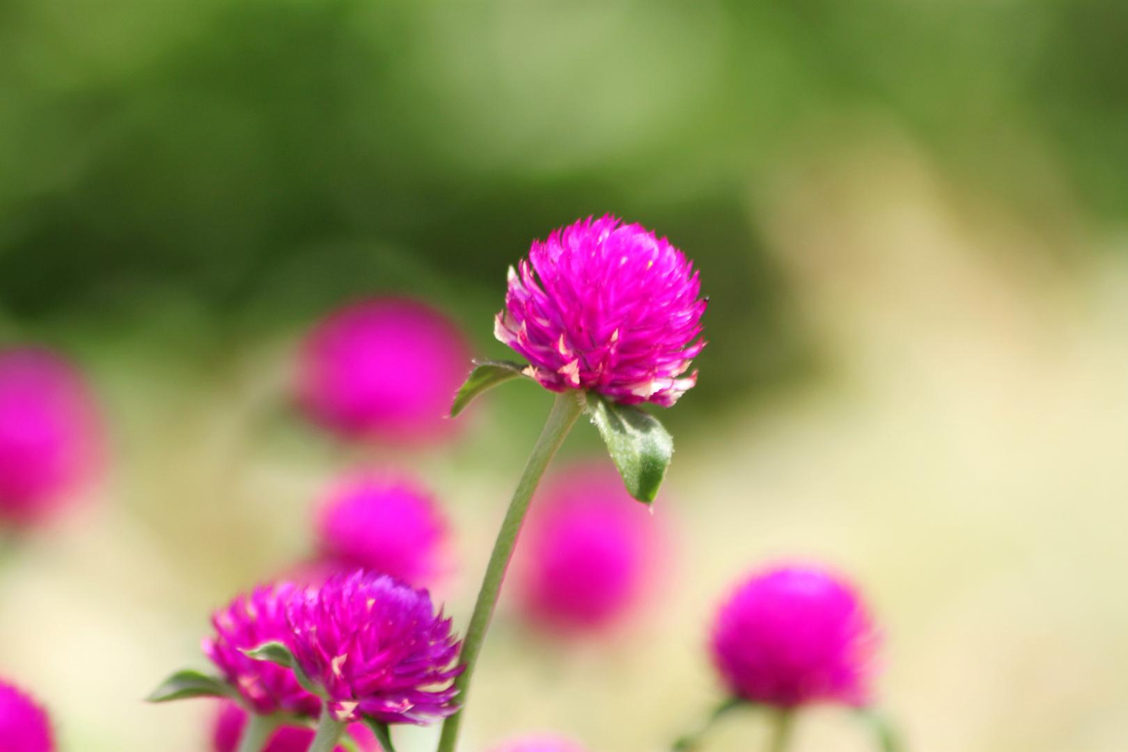 rund lila