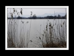 Rund um den Tachinger See 4
