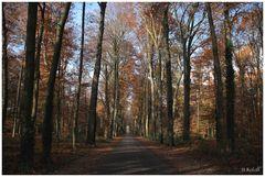 Rund um die Surenburg Riesenbeck November 2010