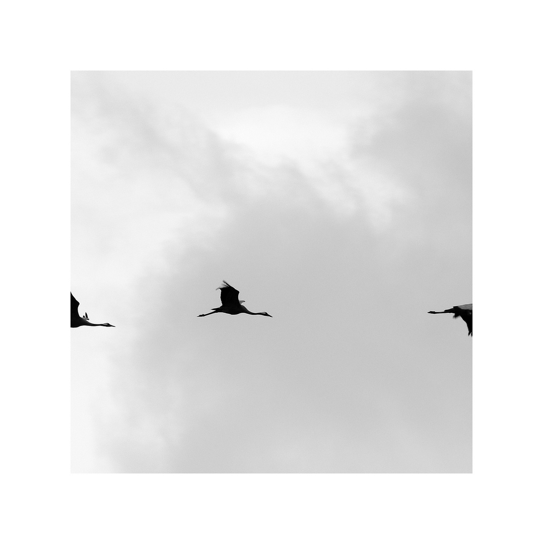Rundflug