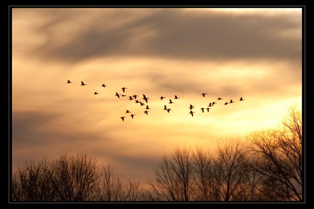 Rundflug durch die Abendsonne