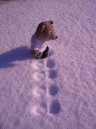 Rundfuß-Bär