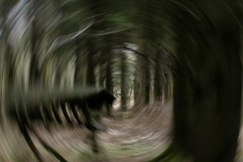 rundherum, ... der Wald