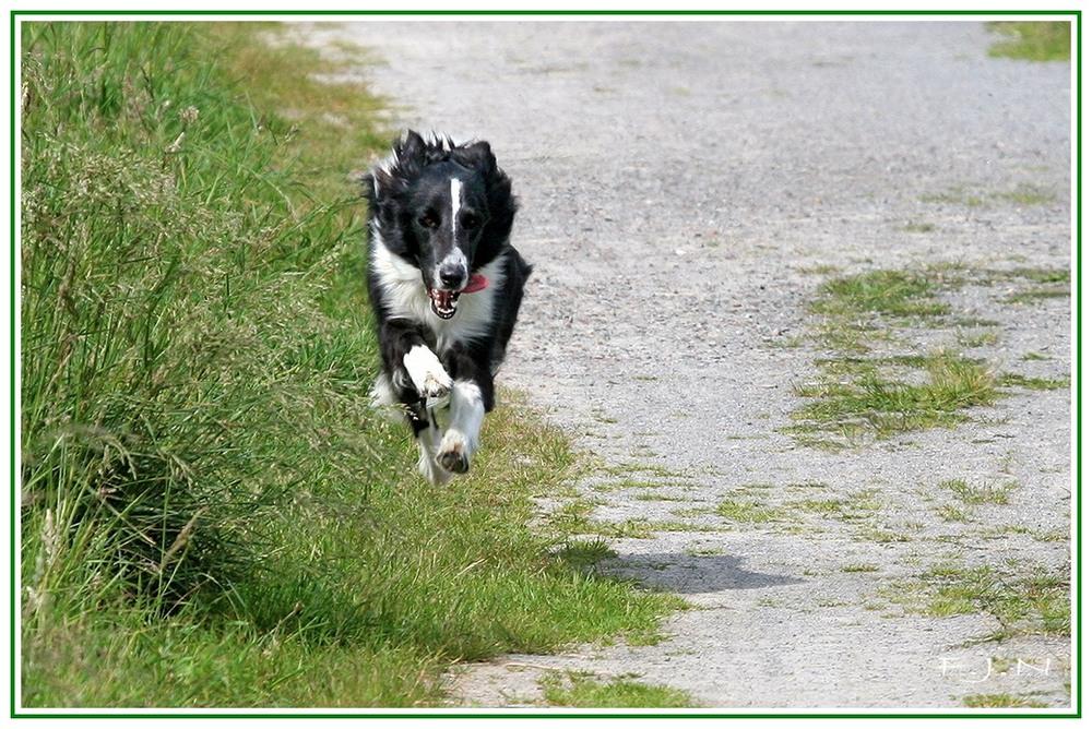 Running Dog? Flying Dog?