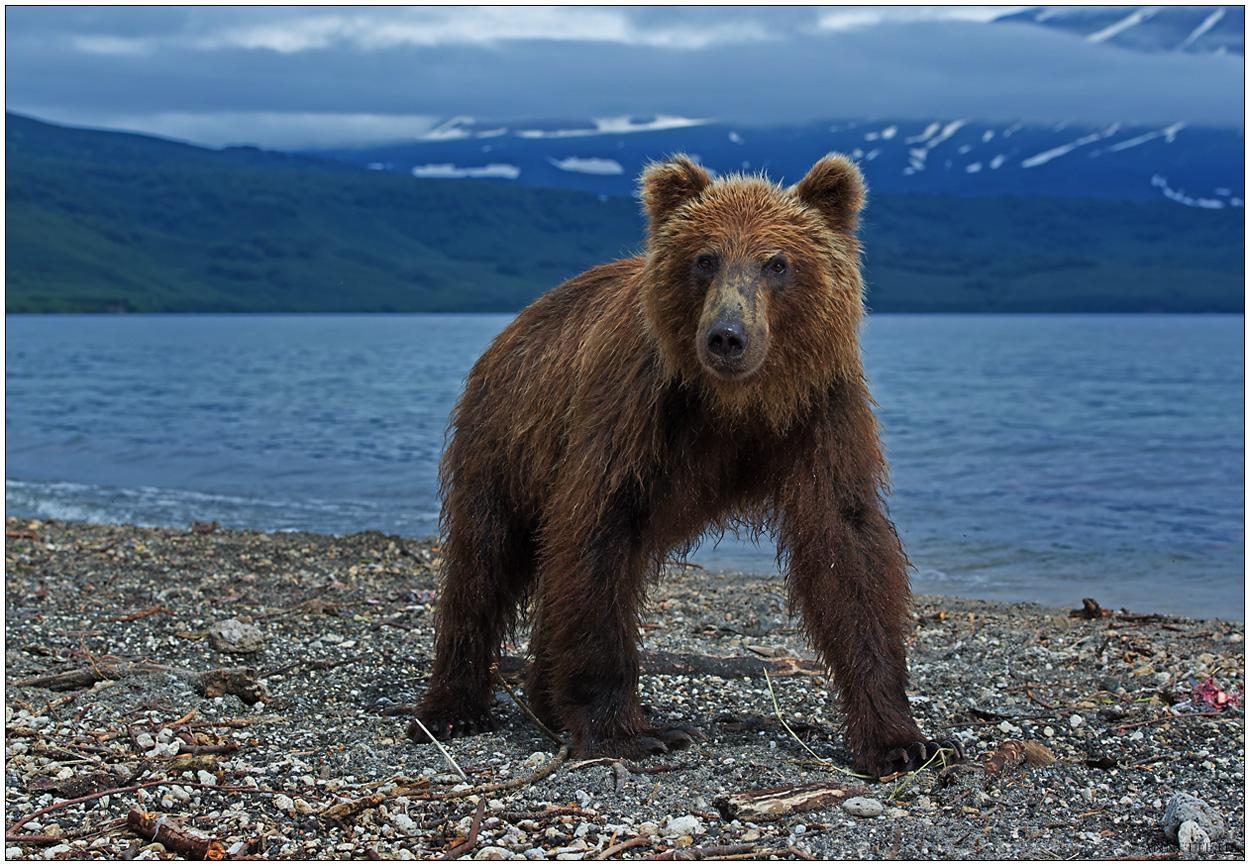 Russlands wilder Osten [2] - Bären