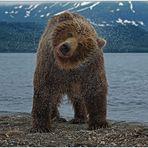 Russlands wilder Osten [91] - Bärenshake