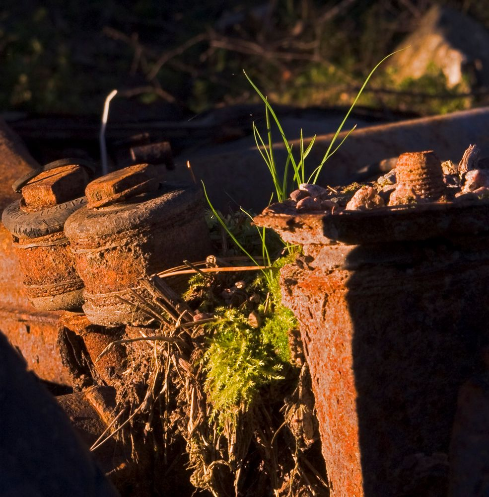 Rust and grass