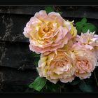Rustic autumn roses