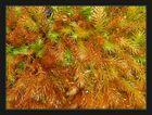 Rusty Moss