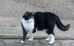 Rusty the Cat-0315