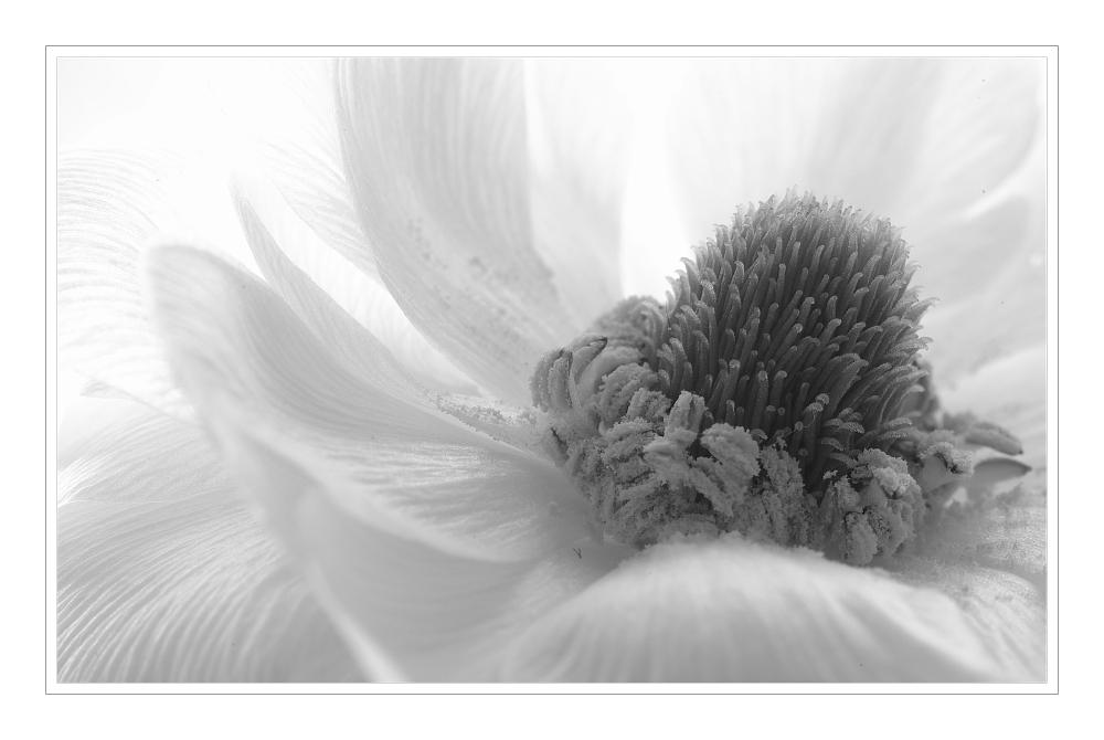 Rêve en blanc (IV)