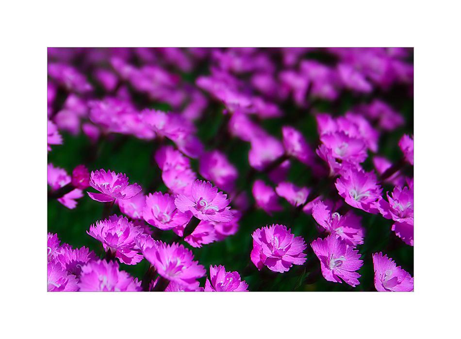 Rêve en violet