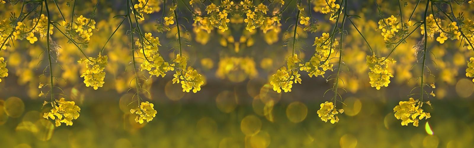 rêveries en jaune