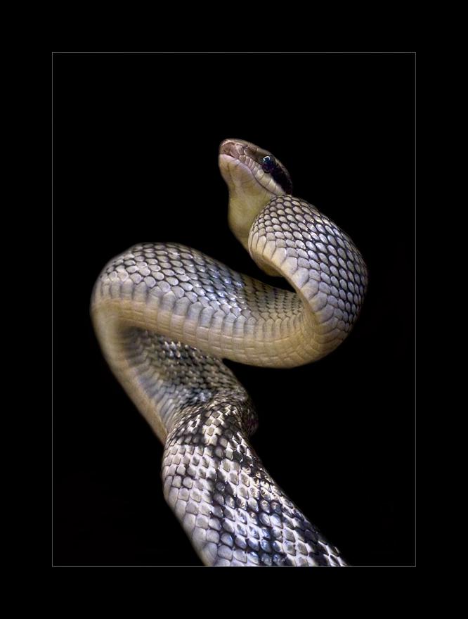 S wie Slange...oder war es doch schlange?