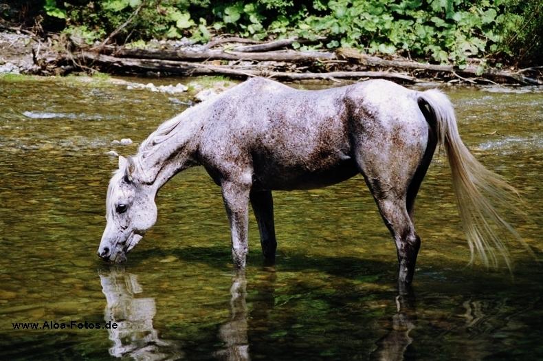 Saaidah im Fluss