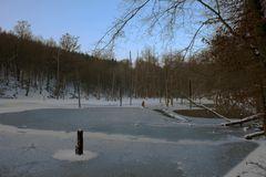 Saar-Urwald [#02]