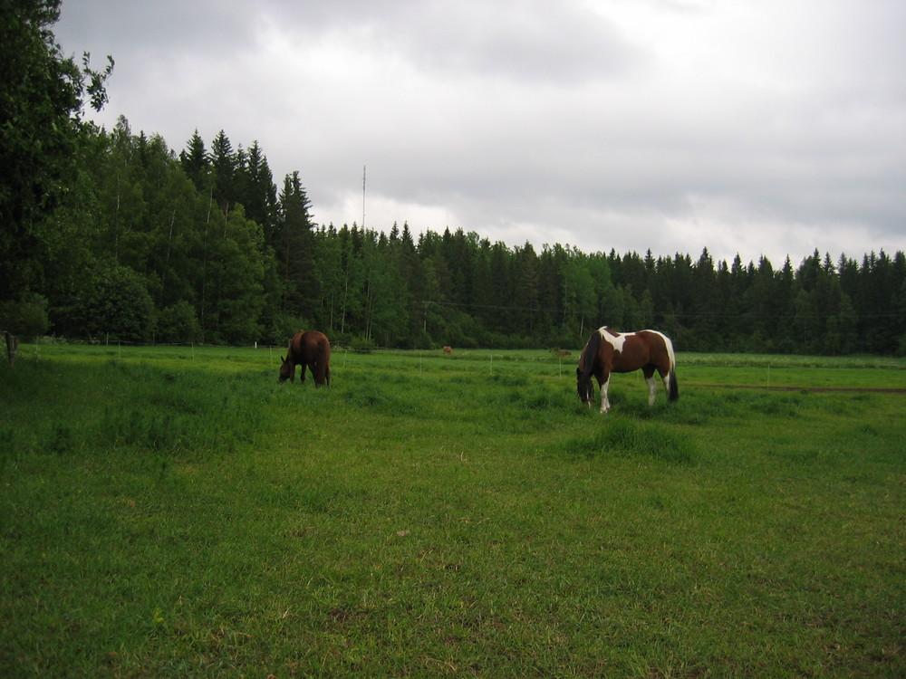 Saara & Finski