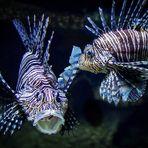 Sabine war im Aquarium