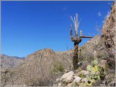 Sabino Canyon #1