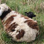 """""""Sach bloß nix - von wegen schwarzes Schaf und so!"""""""