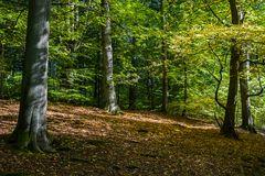 Sachsenwald bei Aumühle