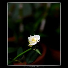 .:: Sacred White ::.