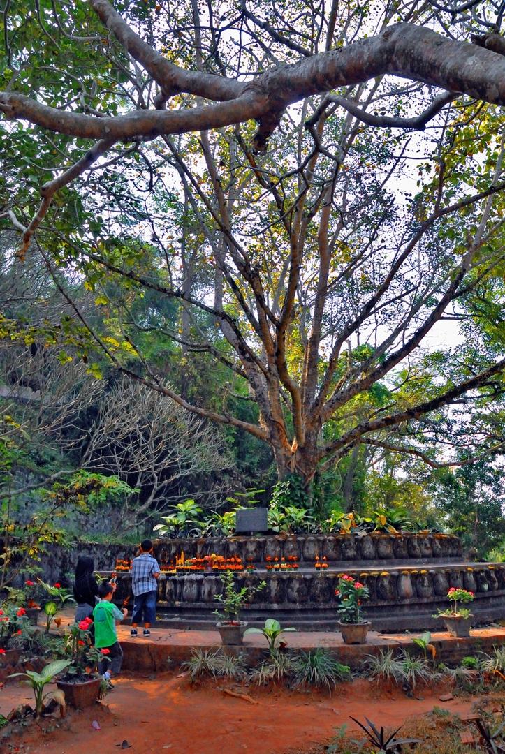 Sacrifice ceremony at a Bodhi tree