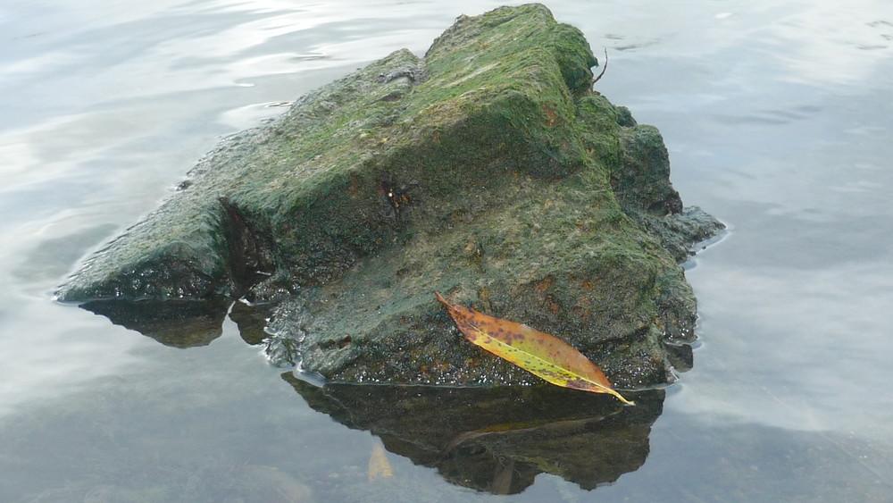 S'acrocher à un rocher......La vie.
