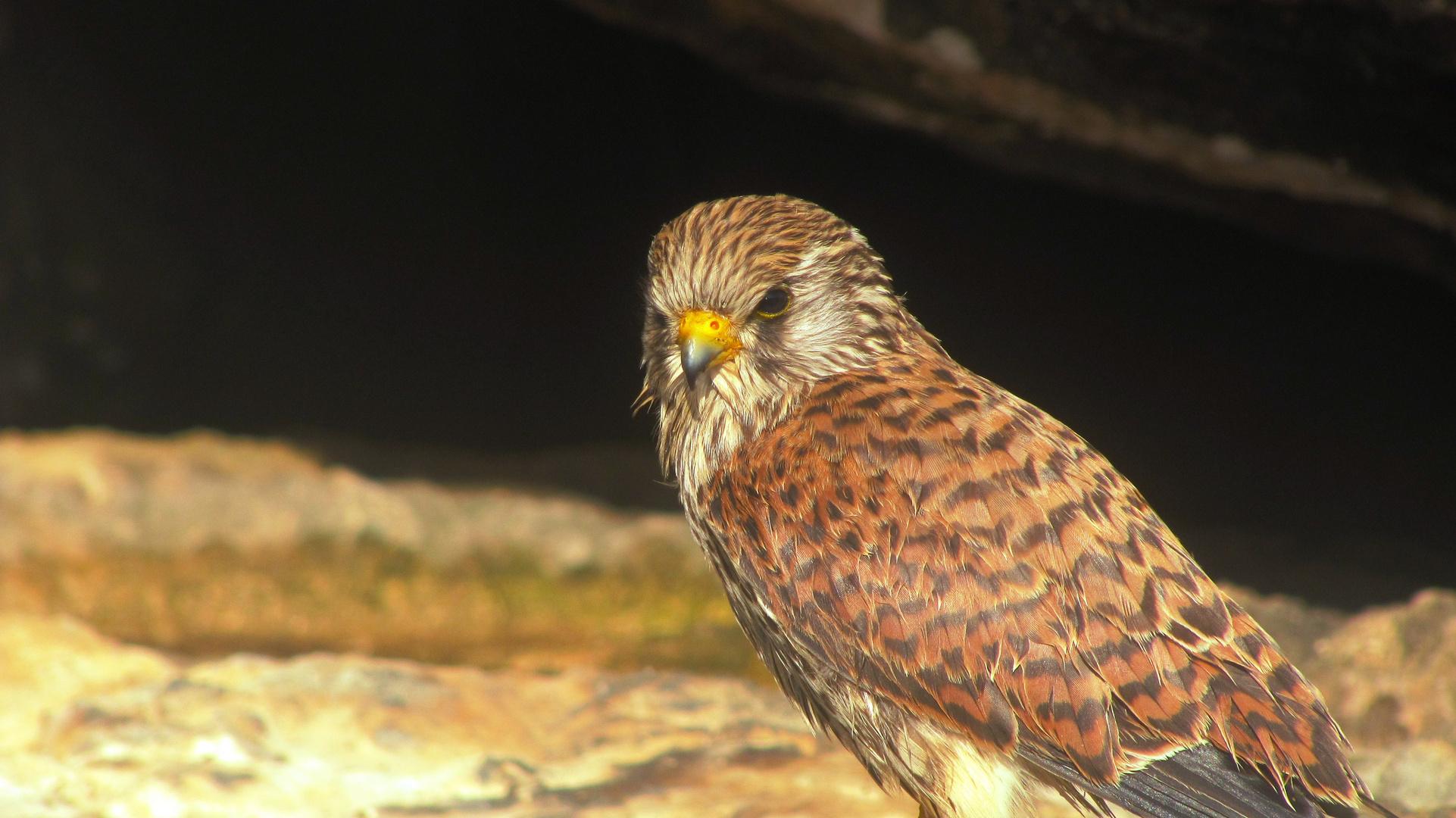 Sad Bird - nach dem Sturm